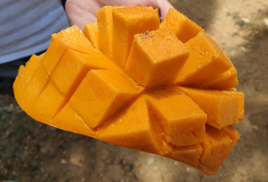 Свежее манго fresh mango