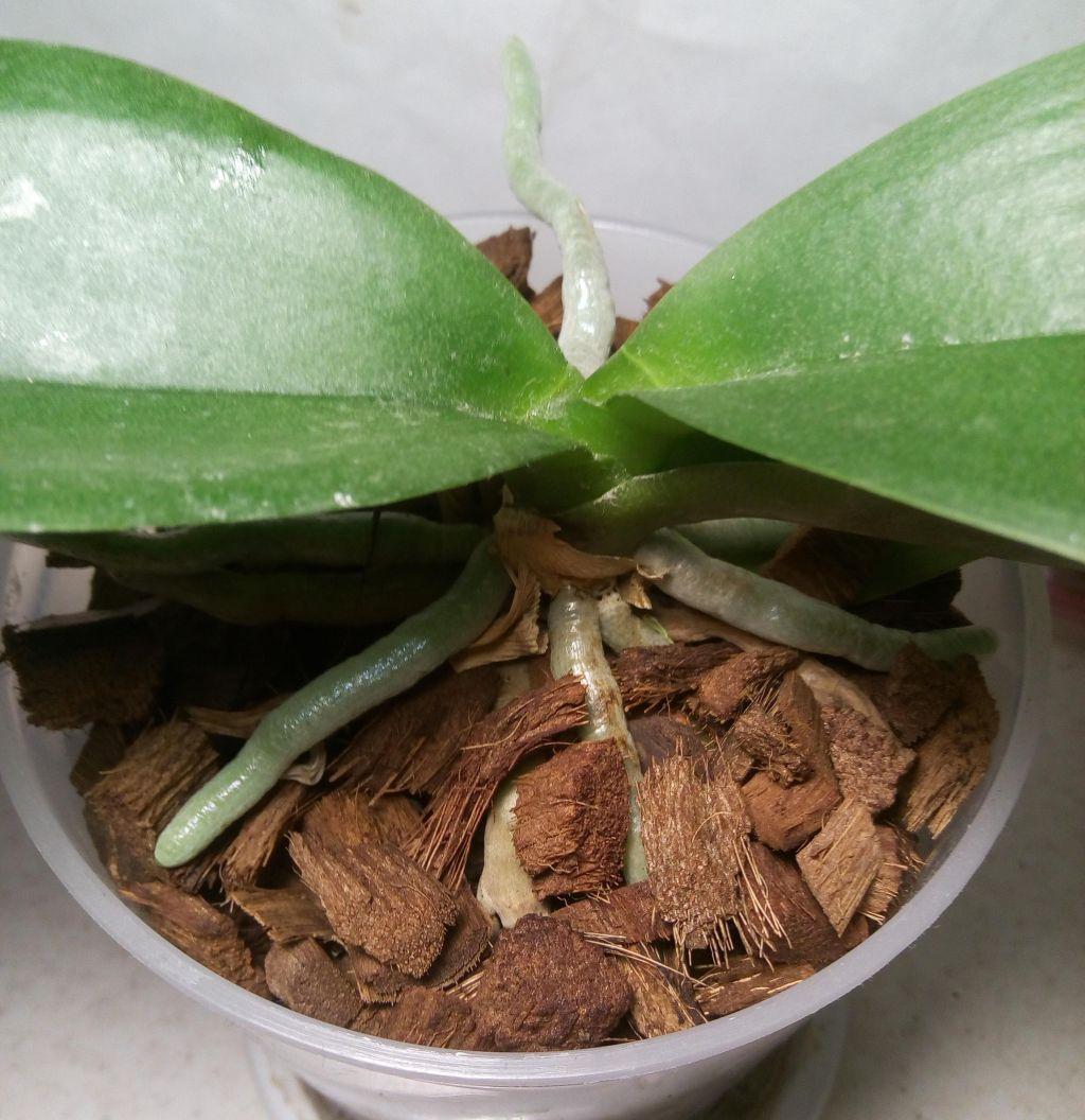 Кокосовые чипсы для орхидей