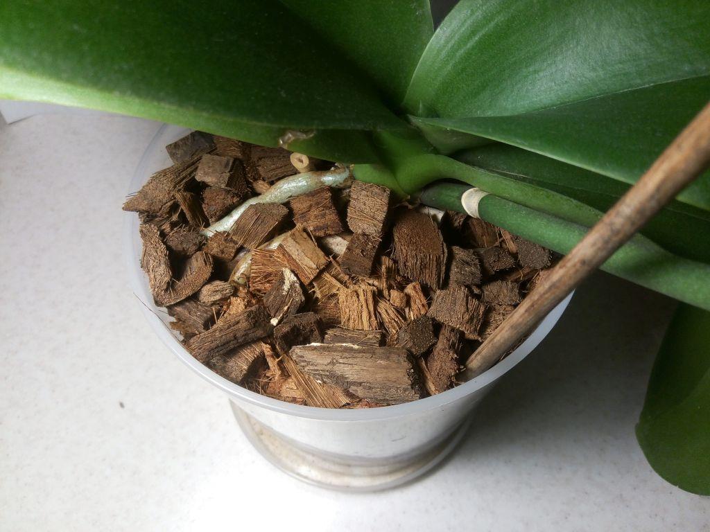 Кокосовые чипсы в брикете для орхидей